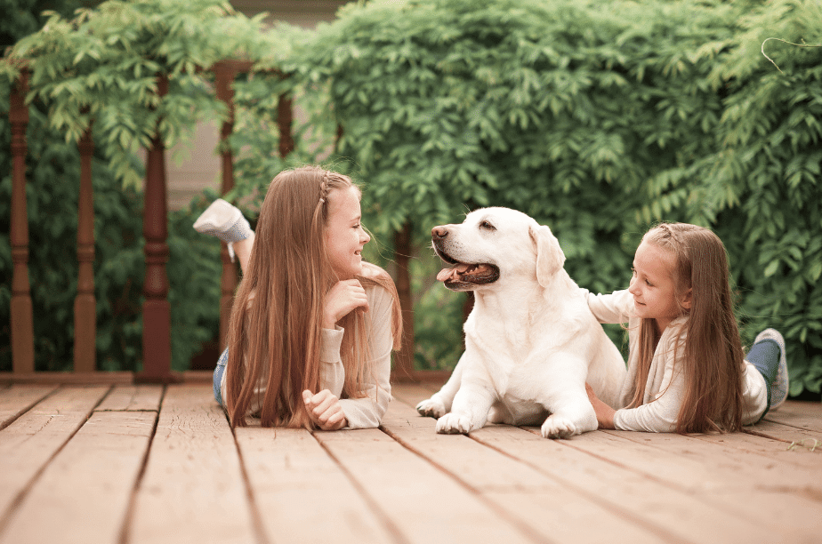 children playing with labrador puppy